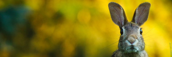 conejo, medio ambiente, naturaleza, animal, bunny, iso, 14001